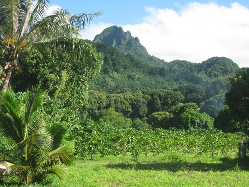 Rarotonga Countryside