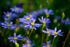 flowers of purple and yellow
