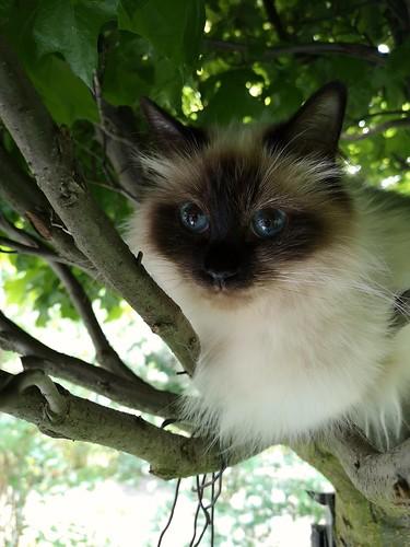 Kila in ihrem Lieblingsbaum