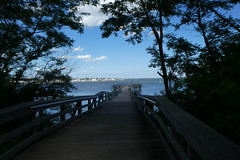 Norman J Levy Park and Preserve (6)