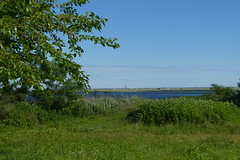 Norman J Levy Park and Preserve (5)