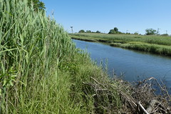 Norman J Levy Park and Preserve (4)