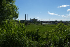 Norman J Levy Park and Preserve (2)