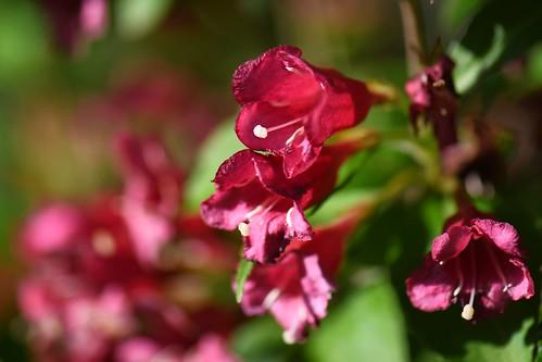 Blumen Gresten