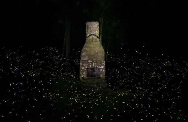 Synchronous fireflies - Elkmont Smoky Mountains