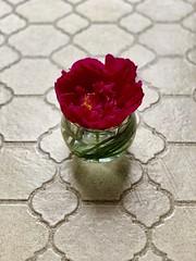 Image by valatal (vmolloy) and image name #gardenpeonies #peony #summergarden #flowerpower #grewitmyself photo