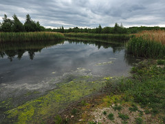 st aidan's nature reserve