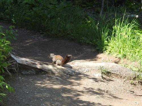 Squirrel on trail