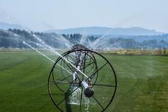 Sprinkler_8122b