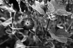 Proxy flower