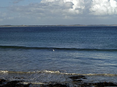 Solitary gull at the Basin