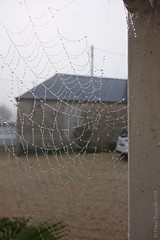 Morning Dew on Spiderweb - Photo of Colombières