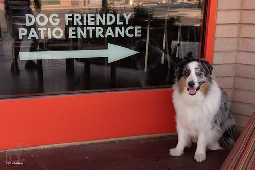 24/52 Friendly Dog Entrance