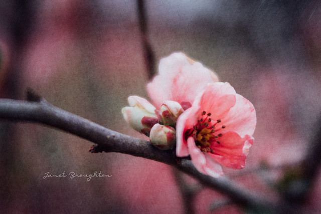 Blossom + Texture