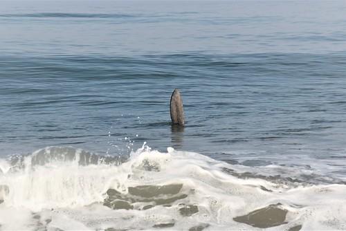 hello Mola mola