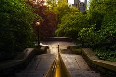Sunrise on Central Park...