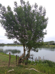 Arbre - Photo of Montbellet