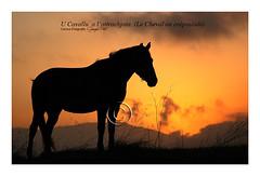 cavallu à l'attrachjata