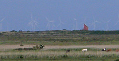Red Sails and Wind Turbines