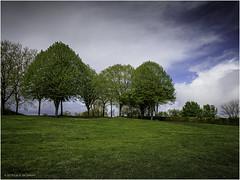 Landscape - Photo of Saint-Genès-de-Blaye