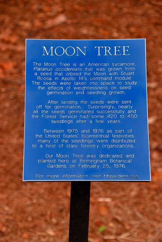 'Moon Tree' Plaque -- Birmingham Botanical Gardens (AL) 2019