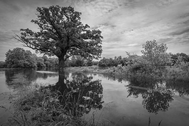 Burr Oak Floodwaters Monochrome