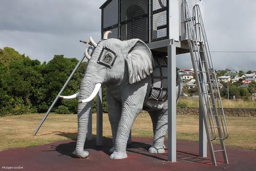 Un éléphant à Oamaru