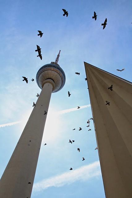 Fernsehturm & Alexanderplatz Vs The Birds