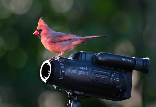 Red Movie Star