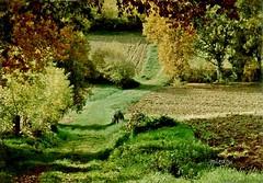 Paysage de La Sauve... (Gironde - France)