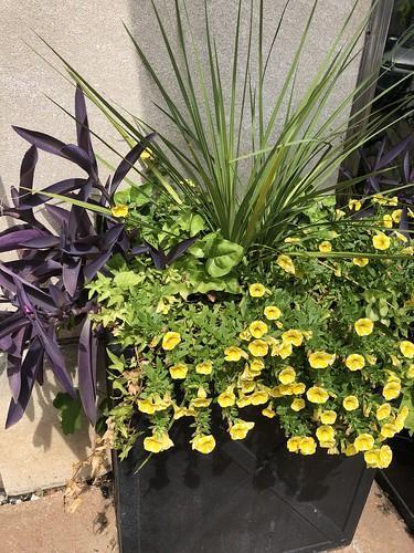 Pot of yellow, green, purple, Flowers