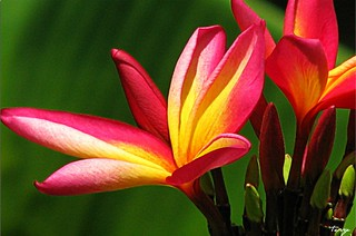 """""""Beauty is a nectar which intoxicates the soul."""" T.C. Henley"""