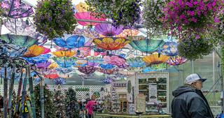 Colorful Gift Shop - Explore (June 19th, 2019 - #75)