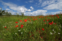 La saison des coquelicots - Photo of Biblisheim