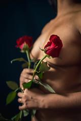 Mélusine roses 3 - Photo of Roche-la-Molière