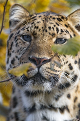 Leopard and vegetation