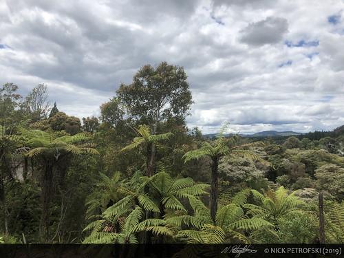 Bay of Plenty, New Zealand (29-November-2018) 16