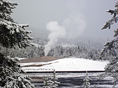 Snowstorm in Yellowstone (8 June 2019) 6