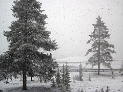 Snowstorm in Yellowstone (8 June 2019) 14