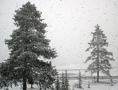 Snowstorm in Yellowstone (8 June 2019) 16