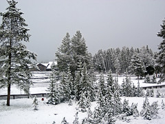 Snowstorm in Yellowstone (8 June 2019) 4