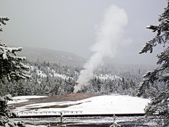 Snowstorm in Yellowstone (8 June 2019) 10