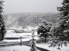 Snowstorm in Yellowstone (8 June 2019) 9