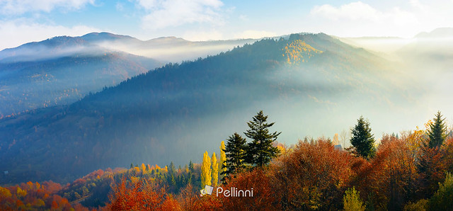 foggy autumn scenery in mountains at sunrise-181906 (2)