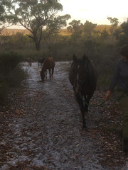 Equine Procession – Red Moon Sanctuary, Redmond, Western Australia