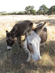 Mary Lou and Sparkle – Red Moon Sanctuary, Redmond, Western Australia