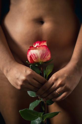 Mélusine roses 4