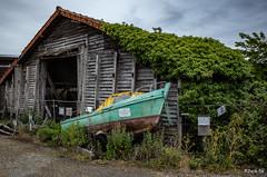 _R001252 - Pendant que les bateaux....