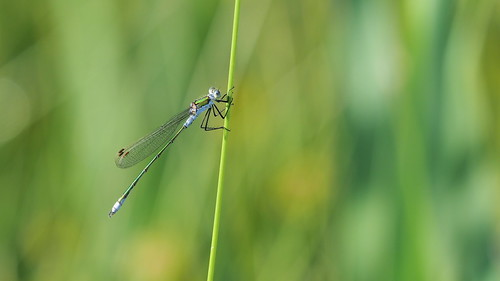 Elegance in nature