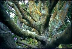 Arbre - Photo of Vasteville